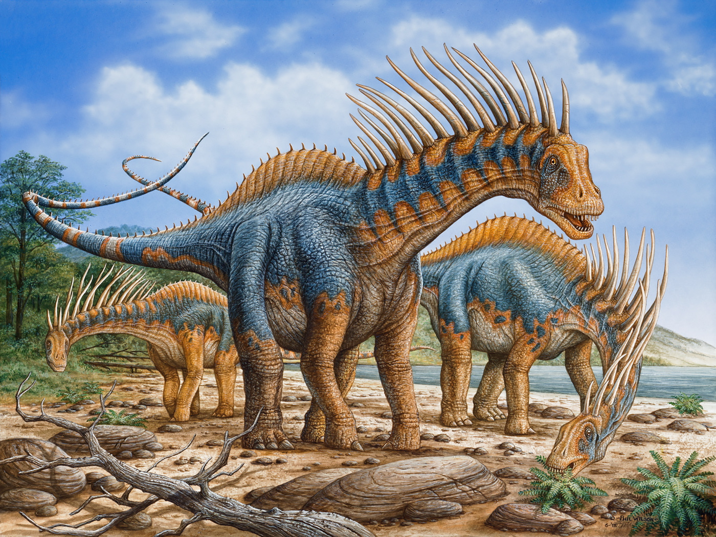Amargasaurus group -s